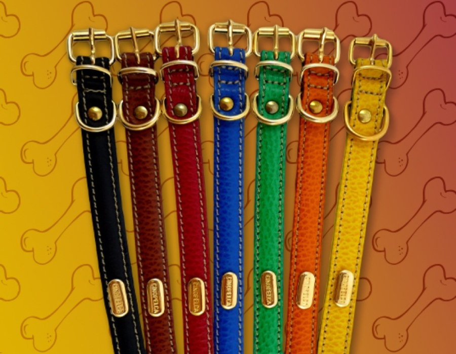 Fashion or Function – How to Choose a DogCollar